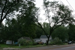 Faribault storm, #1 little house with fallen trees