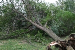 Faribault storm, #54 tree on friend'shouse
