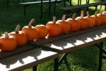 Wabasha, #367 pumpkins on picnictable