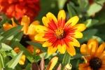Backroads, #160 flowers ingarden