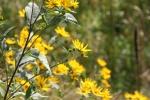 Backroads, #93 yellow flowers bylake