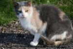 Cat, #89 orange andgray
