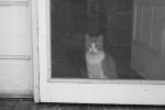 Cat behind door