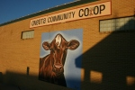 Decorah, #76 cow painting on co-op