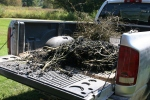 Seed Savers, #203 berries in pickupclose-up