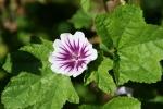 Seeds, #195 purpleflower
