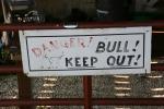 Seeds, #206 bullsign