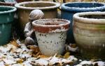 Snow, #161 snow onflowerpots