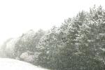 Snow, #209 evergreens