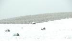 Snow, #241 bales in snowy field –Copy