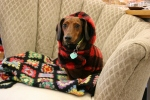 Christmas in Northfield, #23 Beau thedog