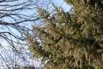 Winter walk in Minnesota, #33trees