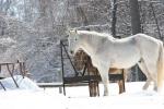 Winter scenes, #30 horse &donkey