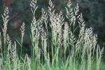 Faribault Energy Park, #57grasses