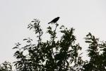 Faribault Energy Park, #64 bird intree