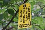 Gratitude tree, #17 Each moment of mylife