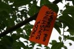 Gratitude tree, #25 tacos,sunshine…