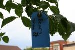 Gratitude tree, #26bears