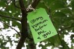 Gratitude tree, #37 strongwomen