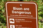 Bison, #157 dangeroussign