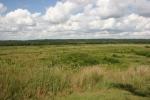 Bison, #171 prairie
