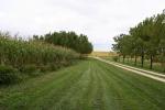 Aspelund Winery, #32 corn anddriveway