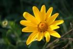 Autumn plants, #49 yellow flowerclose-up