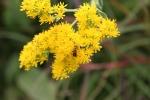 Nature center, #44 bug on yellowflower