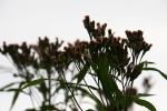 Nature center, #90 driedflowers