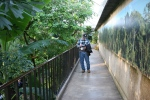 Madison, #5541 conservatory at Olbrich BotanicalGardens