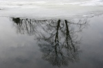 February in Faribault, MN, #6097 tree reflected in CannonRiver