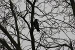 Park, #6709 bird intree
