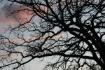 Tree branches, #6803 tree with orange onleft