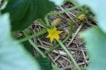 Garden, #9784 blossom