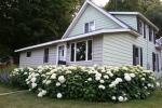 Hydrangea by house,#9078