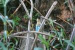 Mini garden art, #9011 rabbit throughtwigs