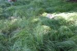 Mini garden art, #9015 prairiedropseed