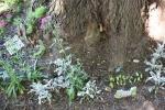 Mini garden art, #9017 looking down on mini gardenscenes