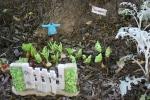 Mini garden art, #9020 no rabbitsallowed