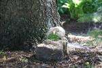 Mini garden art, #9024 peapod