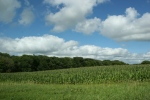 Rural MN, #9734 cornfield &treeline