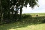 Rural MN, #9745 wildturkeys