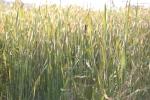 Nature, #109 grass &cattails