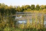 Nature, #110 pond