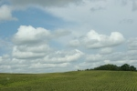 Tour, #647 rural Rice Countylandscape