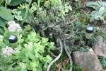 Atwood, #1056 cactus