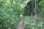 Atwood, #1070 path intowoods