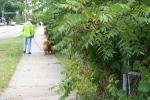 Atwood, #1072 guy walkingdog