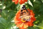 Bike trail, #1002 butterfly onzinnia